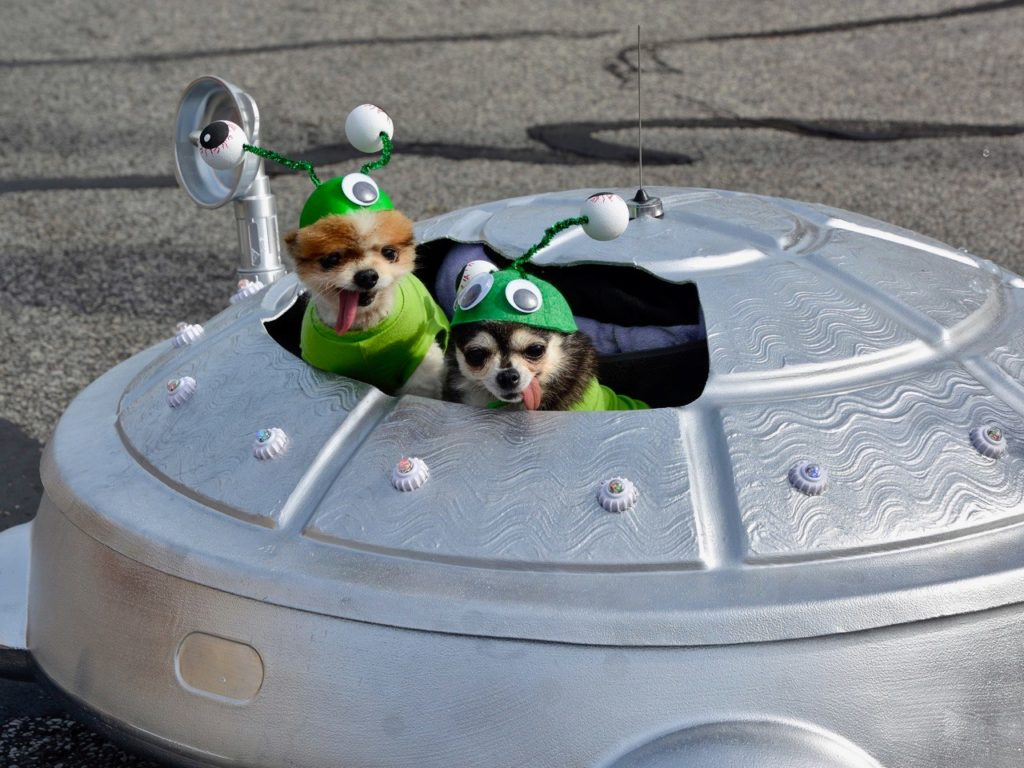 LakewoodAlive 10th Annual Spooky Pooch Parade