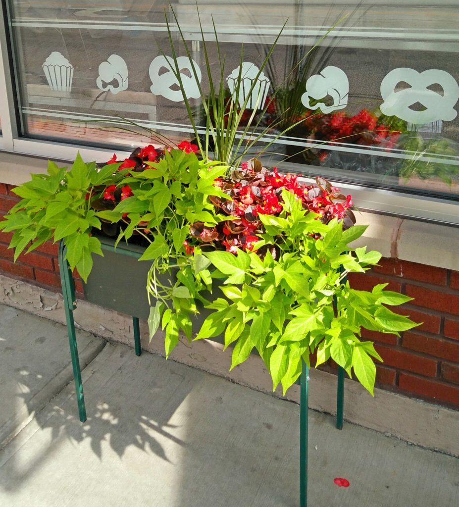 Lakewood Merchants and LakewoodAlive Blossoms Program