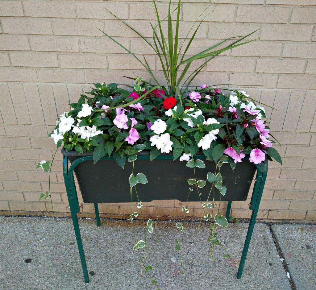 LakewoodAlive Blossoms Program