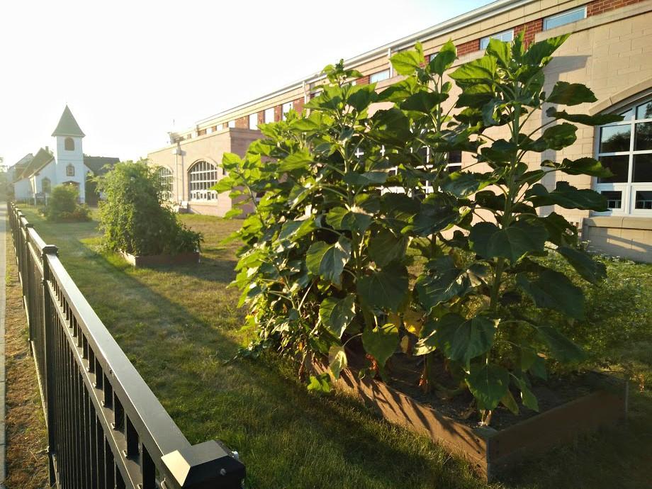 Harrison Elementary Community Garden