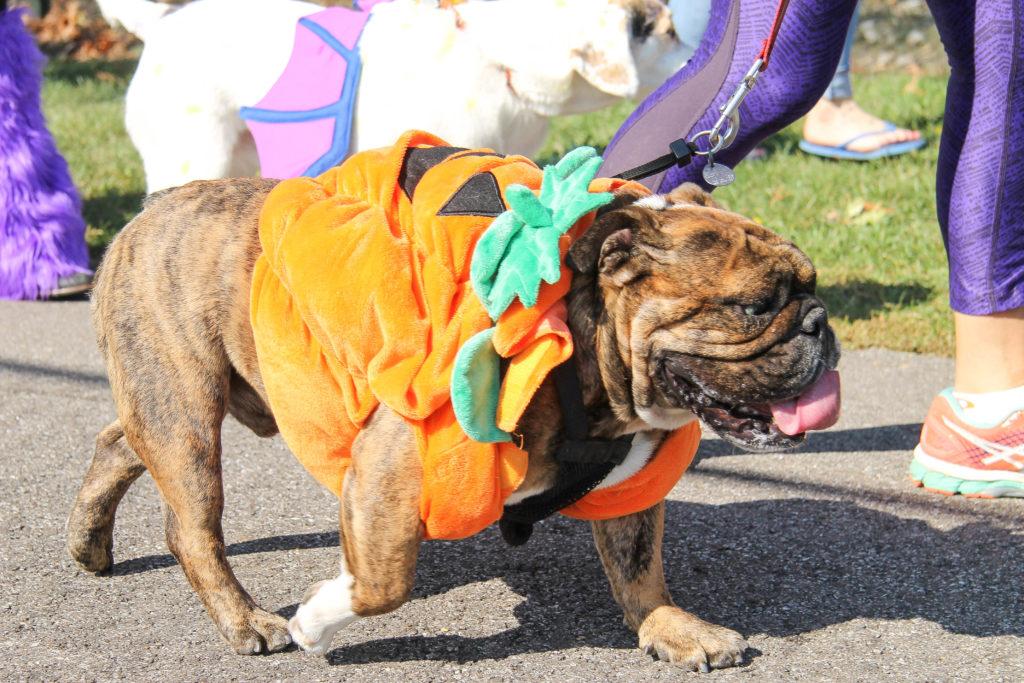 Spooky Pooch Parade at Kauffman Park