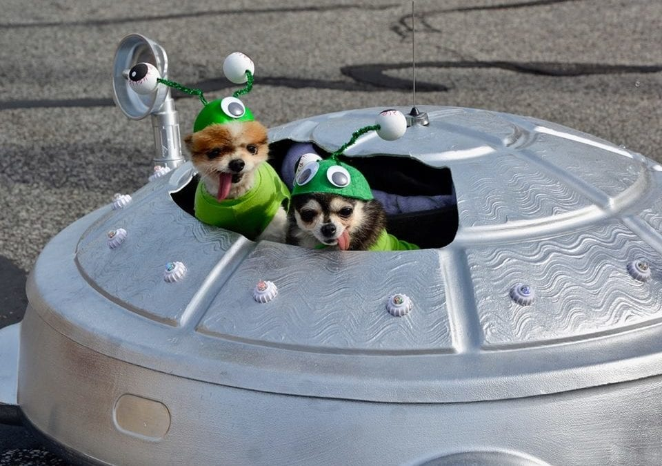 How to be Top Dog at the 11th Annual Spooky Pooch Parade