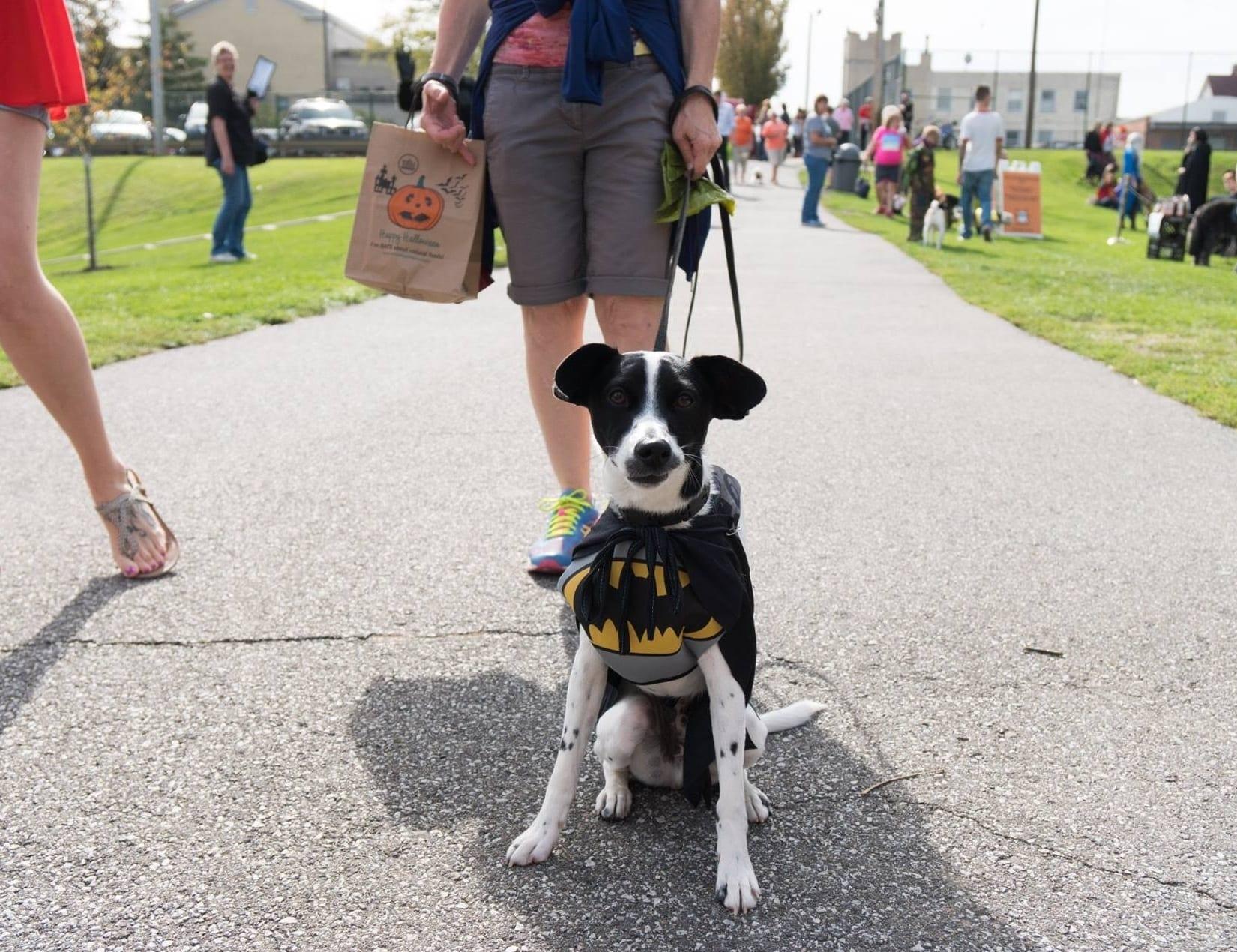 LakewoodAlive Spooky Pooch Parade