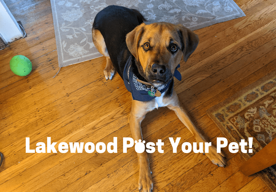 "LakewoodAlive Launches ""Lakewood Post Your Pet"" Community Solidarity Initiative"